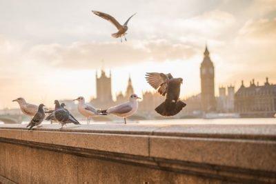 Скопление птиц