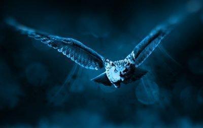 Страх птиц