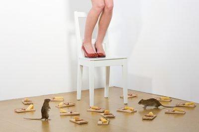 Страх мышей