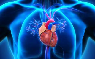 Кардиофобия — страх смерти от сердечных заболеваний